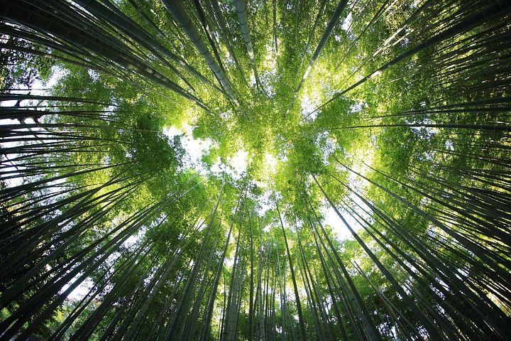 trees-918672__480